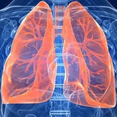 Immagine per la categoria Sistema Respiratorio