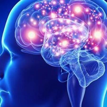 Immagine per la categoria Sistema Nervoso