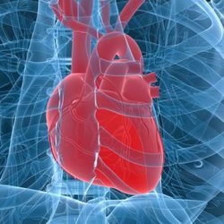 Immagine per la categoria Sistema Cardiovascolare
