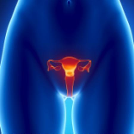 Immagine per la categoria Sistema Riproduttivo Femminile