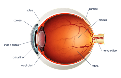 Metodo unico per il restauro delle funzioni retinali